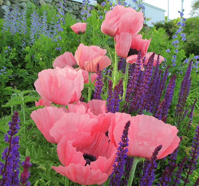 Fine Gardening Services